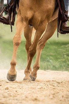 Horse, Trot, Hoof, Legs, Animal, Arabs, Palomino