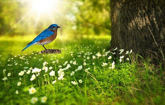 Bird, Bluebird, Bird Png, Nature, Perched, Spring, Tree