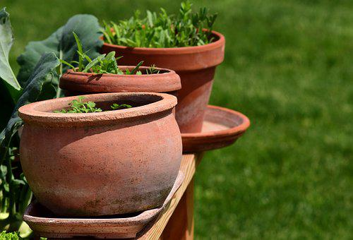 Garden, Plant Pots, Herbs, Terracotta, Decorative