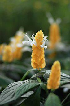 Flowers, Plants, Nature, Wildflower, Yellow Flower