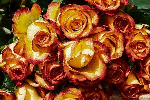 Roses, Bouquet, Rose Flower, Bi Color, Raindrop