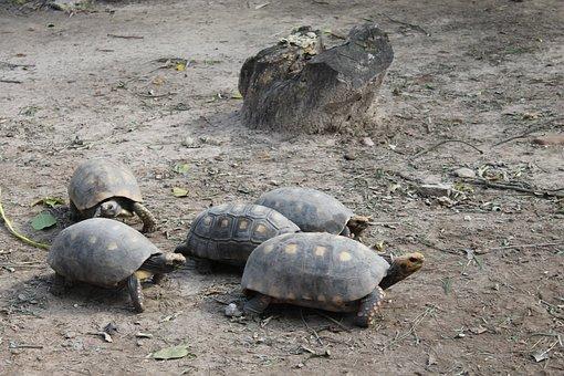 Turtles, Santa Cruz De La Sierra, Zoo Santa Cruz