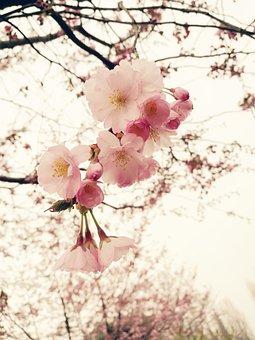 Flowers, Spring, Color, Flower, Spring Flowers, Bloom