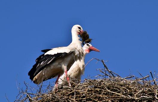 Stork, Nest, Bird, Storchennest, Rattle Stork, Nature