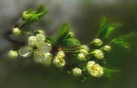 Nature, Spring, Plum Blossom, Sunlight