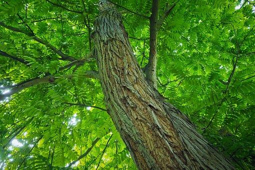 Tree, Tribe, Log, Wood, Forest, Tree Bark, Sun, Green