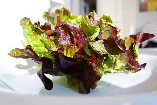 Oak Leaf Lettuce, Salad, Healthy, Frisch, Vitamins