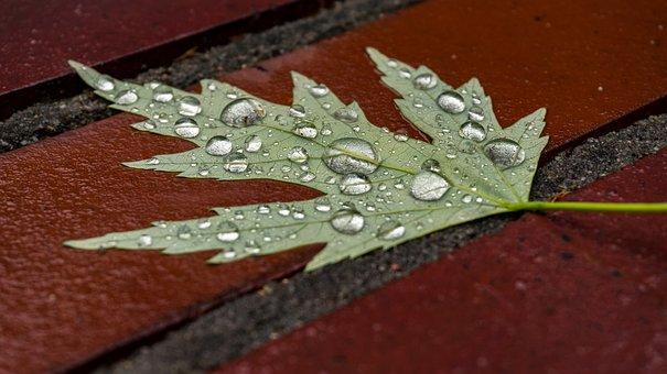 Leaf, Wet, Drip, Water, Close, Wet Sheet, Stone
