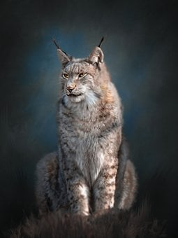 Lynx, Wild Animal, Predator, Nature, Portrait, Big Cat