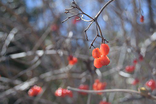 Berry Red, Winter Impressions, Branches, Nature, Sky