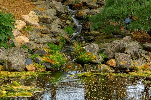 Pond, Fish, Water, Aquatic, Garden, Zen, Goldfish