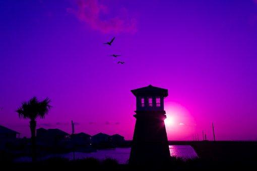 Sunset, Pelicans, Gate Tower, Coastline, Birds