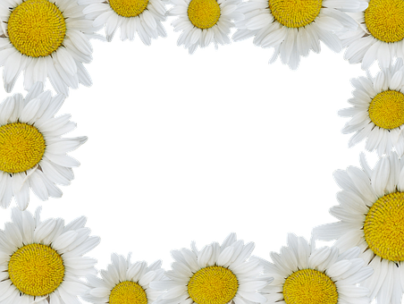 Geese Flower, Isolated, Plant, Nature, Daisy, Blossom