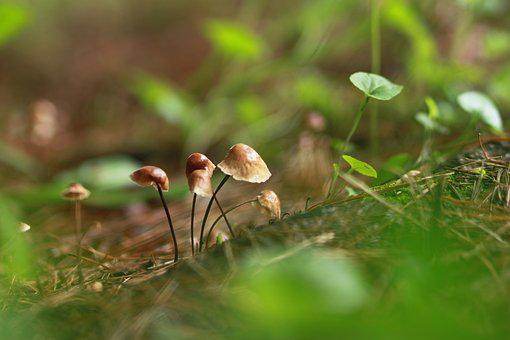 Mushroom, Nature, Forest, Hill, Plants, Mountain, Brown