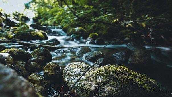 Water, Nature, River, Bach, Forest, Landscape, Case