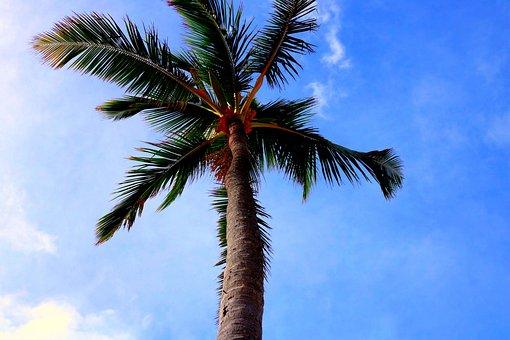 Tree, Palm Tree, Florida, Warm, Dominican Republic
