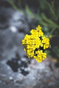 Flower, Yellow, Yellow Flower, Blossom, Bloom, Garden