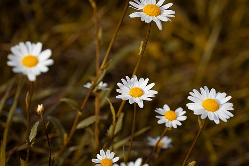 Flower, White, White Flowers, Wildflowers, Flowers