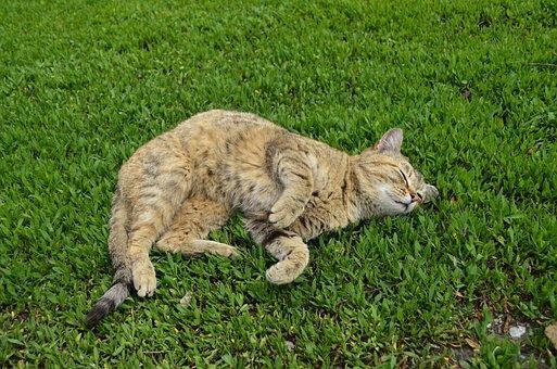 Cat, Cat On The Grass, Green, Grass, Fur, Cats
