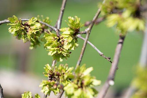 Leaves, Spring, Spriesen, Green, Green Leaves