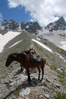 Russia, Elbrus Mountain, Mountain Horse, Horse Karachi