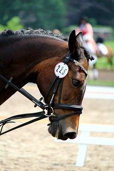 Horse, Horse Head, Animal, Mammals, Tournament