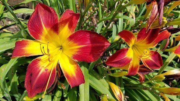 Flower, Lily, Green, Leaf, Light, Nature, Petal, Plant