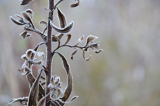 Nature, Frost, Autumn, Rime, The First Frost, Cold