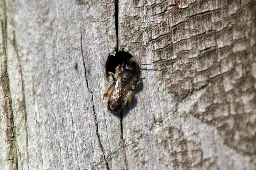 Insect, Fly, Hole, Bee, Log, Construction, Nest