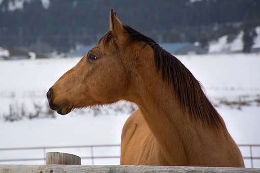 Horse, Farm, Winter, Animal, Ranch, Rural, Pasture