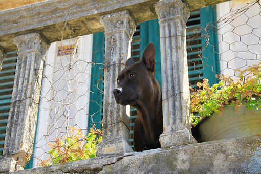 Dog, View, Balcony, Building, Architecture, Views, Pets