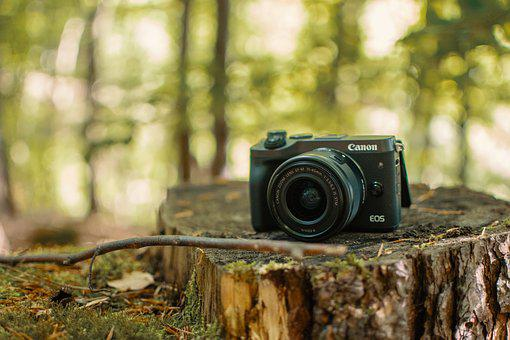 Forest, Camera, Canon, Tree Stump, Photography