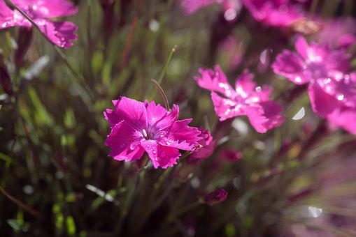 Flowers, Pink, Pink Flowers, Small, Small Flower