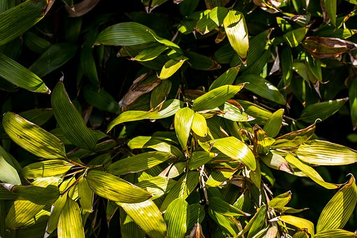 Bush, Green, Nature, Plant, Garden, Leaf, Summer