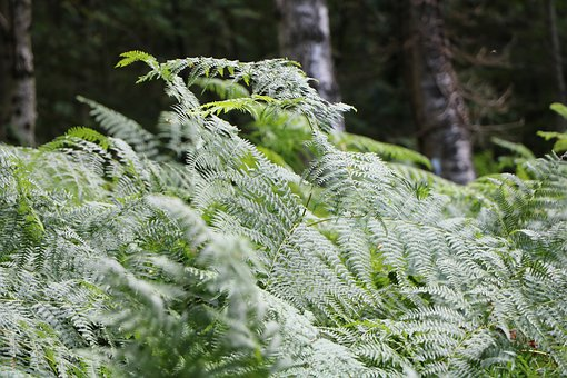 Plants, Green, Nature, Green Plant, Leaves, Foliage