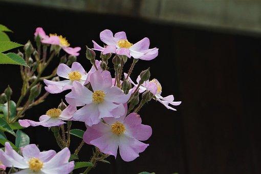 Stuck Under The Flower, Flowers, White Flower, Plants