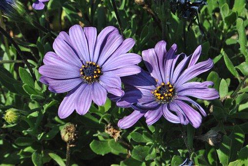 Purple Flowers, Purple, Flowers, Plants, Behold
