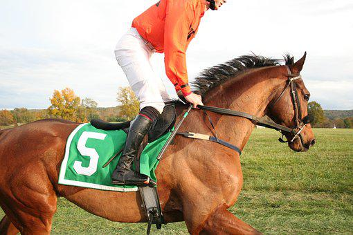 Horse, Racehorse, Sport, Animal, Race, Competition