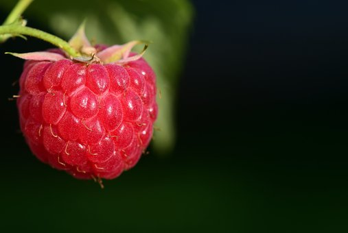 Raspberry, Fruit, Berry, Red, Ripe, Close, Sweet