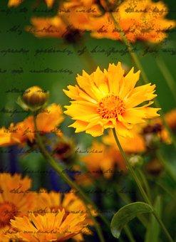 Marigold, Flower, Bloom, Letter, Summer, Romantic