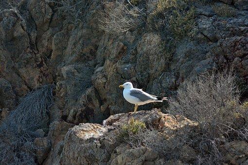 Seagull, Birds, Nature, Sea, Beach, Bird, Waterfowl