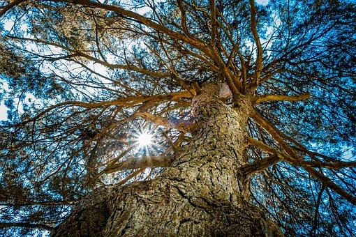 Tree, Sun, Branch, Bark, Light, Nature, Natural, Shine