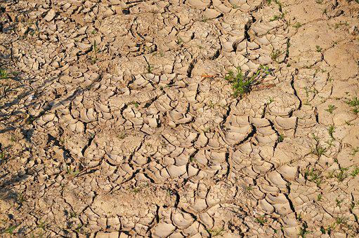Dry Soil, Drought, Dehydrated, Shriveled From