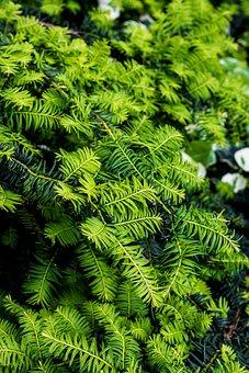 Nature, Plant, Garden, Leaf, Summer, Natural, Landscape