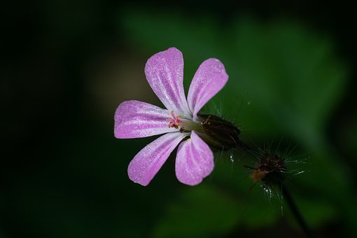 Blossom, Bloom, Plant, Nature, Violet, Macro