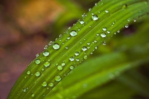 Leaf, Water, Drip, Green Leaf, Green, Plant