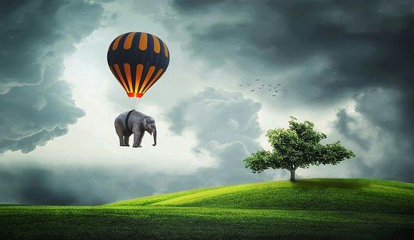 Elephant, Balloon, Fly, Tree, Field, Cornfield, Nature