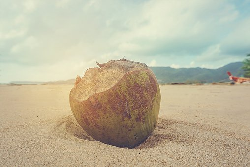 Coconut, Caribbean, Exotic, Coconuts, Palm, Nuts, Shell