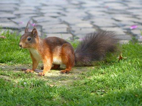 Squirrel, Rodent, Animal, Garden, Nature, Cute