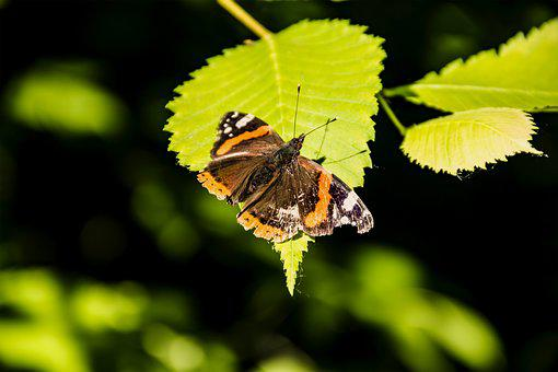 Butterfly Sitting On A Leaf, Green Leaf, Flora, Insect